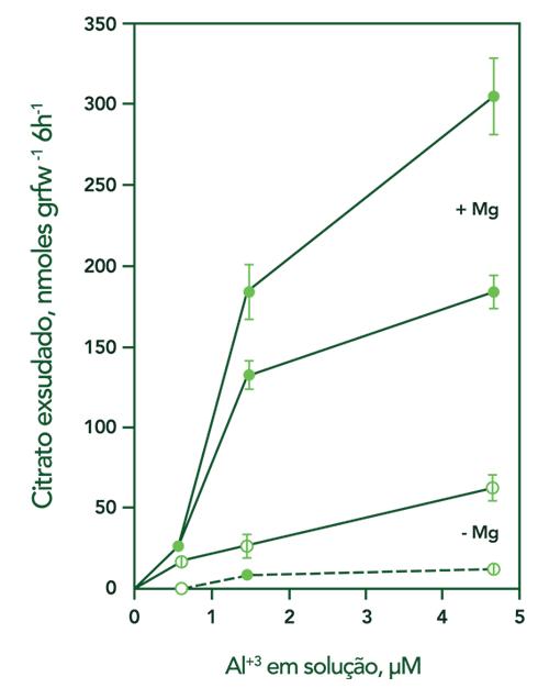 Gráfico exsudação de citrato