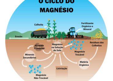 A dinâmica do magnésio no solo