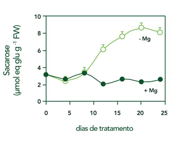 Concentração de sacarosa - gráfico