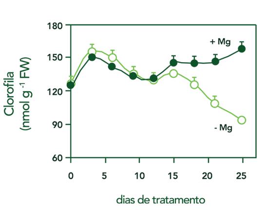 Concentração de Clorofila