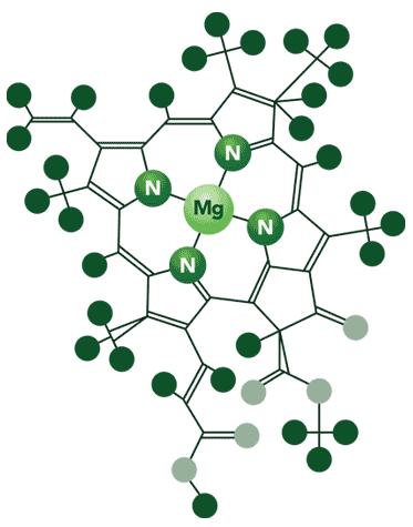 Molécula de Clorofila