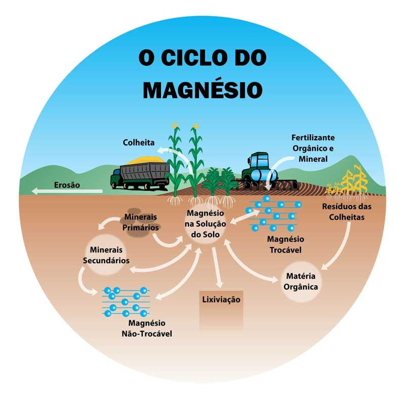 O Ciclo do Magnesio