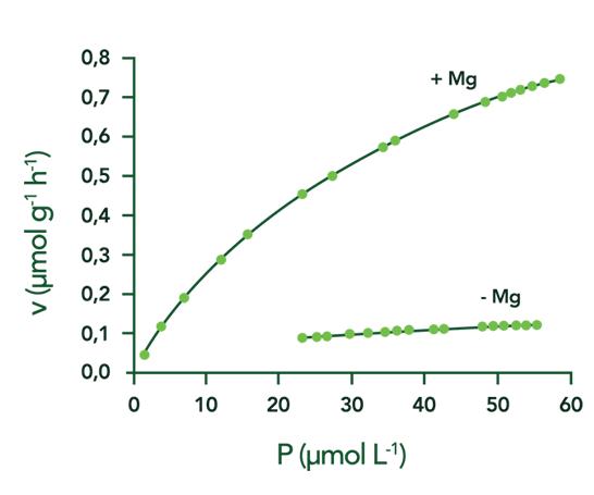 Gráfico velocidade de absorção magnésio